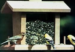 424_birds_at_feeder.jpg